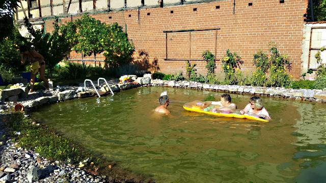 Fragen Zum Teich Reinigen Klares Wasser Im Teich