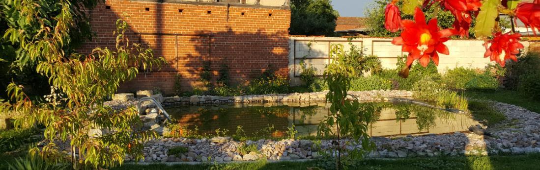 Klares Wasser im Teich